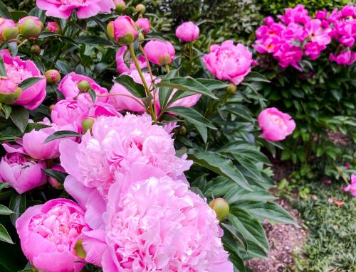 初夏のお花とディメーター